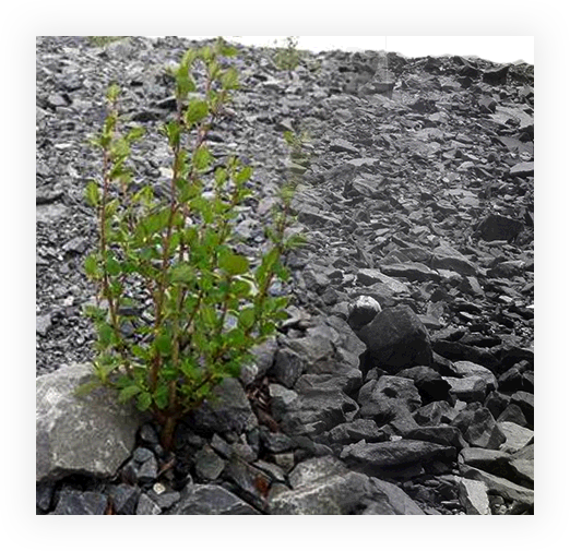 plant-symbiotique